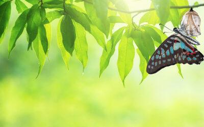 Butterflies are Lucky